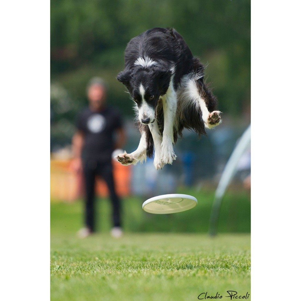 10 Hilarious Pictures Of Dogs Catching Frisbees