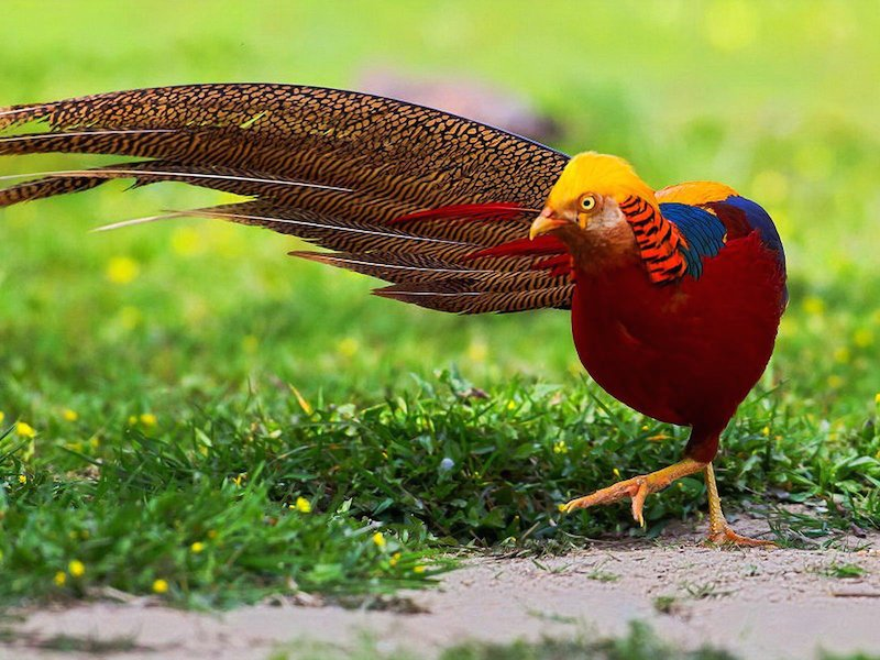 15 Of The Most Beautiful Birds In The World