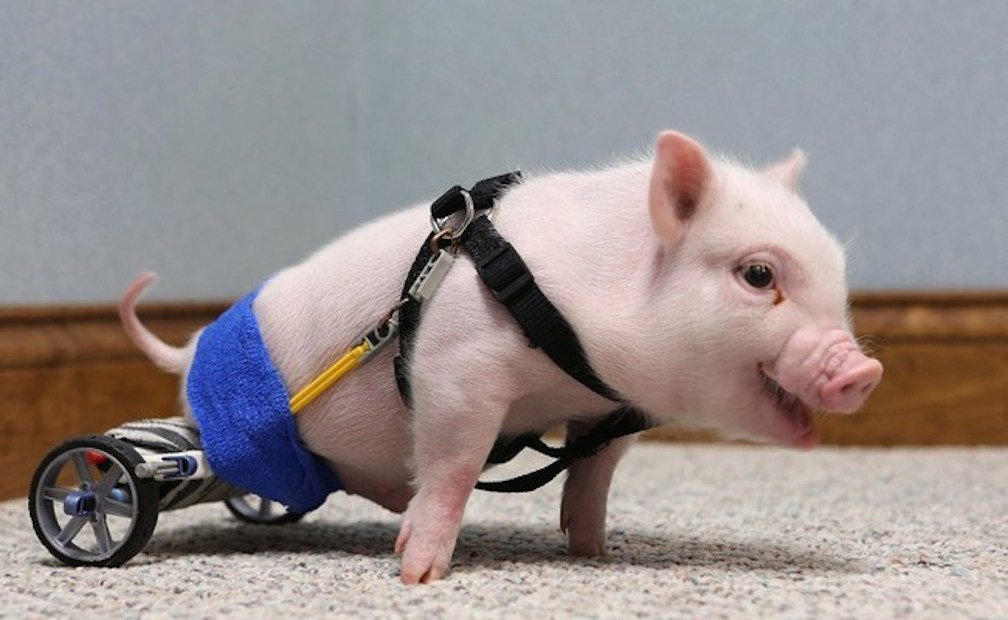 20 Adorable Animals With Amazing Prosthetics
