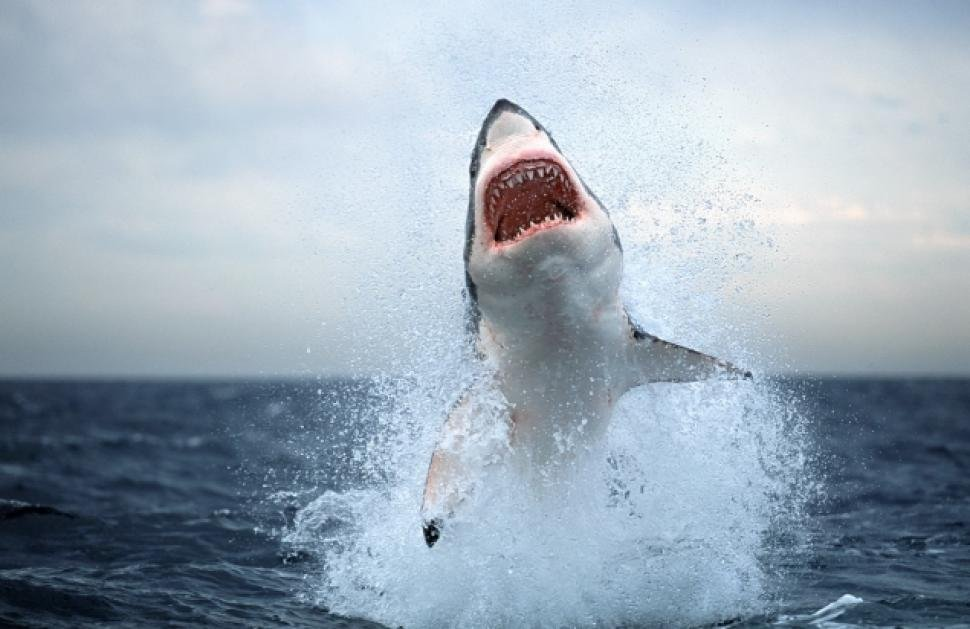 20 Horrifying Shark Attacks That Will Make You Question Going Swimming