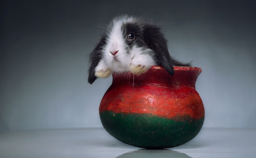 Ten Ridiculously Adorable Animals in Cups