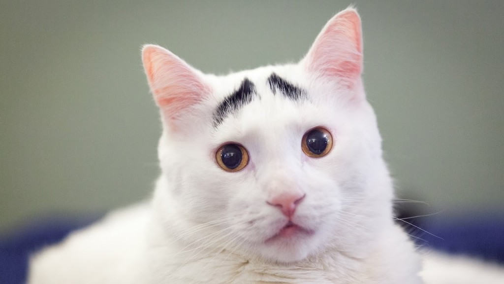 20 Cutest Dogs And Cats With Eyebrows, Beards, Or Mustaches