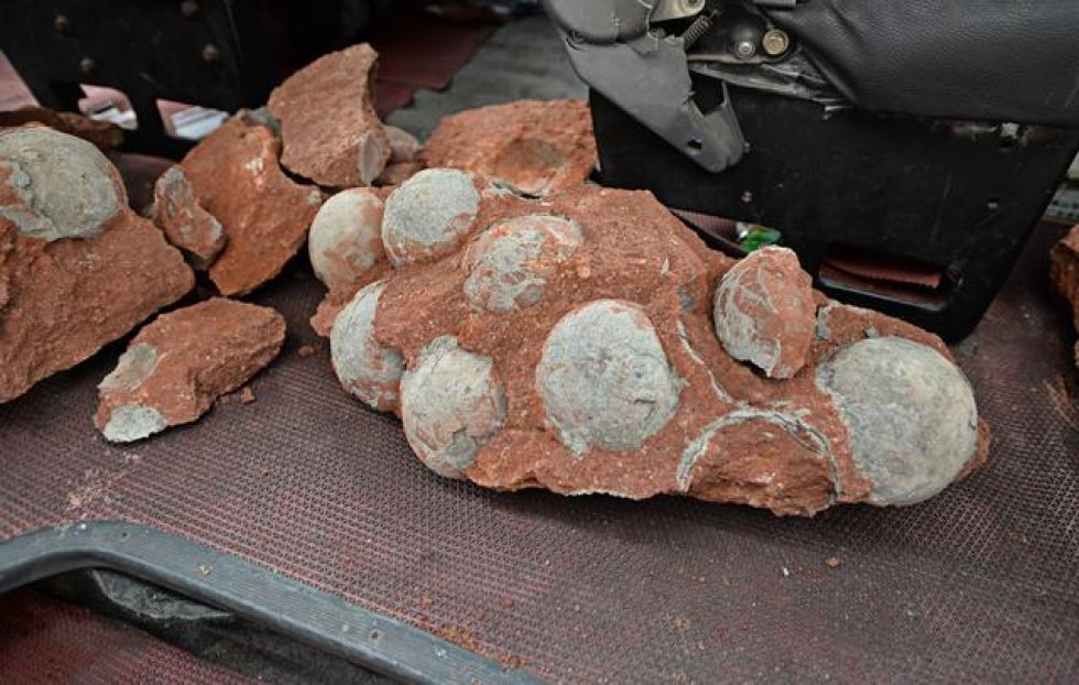 43 Dinosaur Eggs Discovered In Southern China