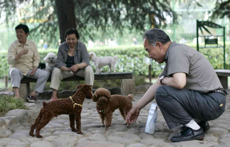 Chinese Officials Claim They Will Beat Dogs To Death
