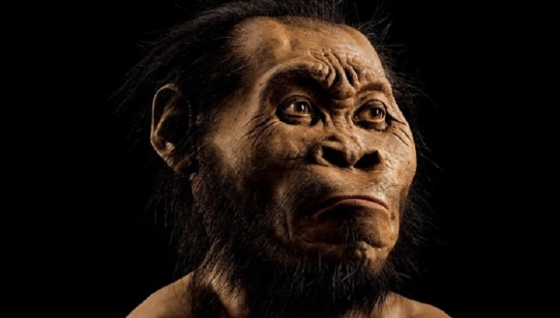 Scientists Discover New Species Of Early Human