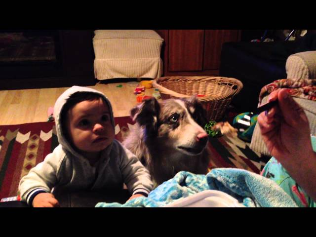 Baby Can't Say 'Mama', You'll Never Guess What The Dog Does Next