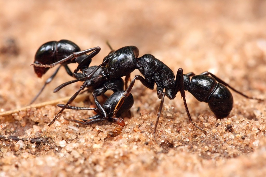 10 Crazy Facts You Never Knew About Ants