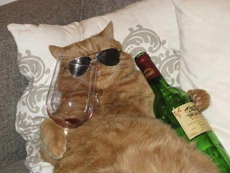 10 Hilarious Pictures Of Animals Who Drank Too Much