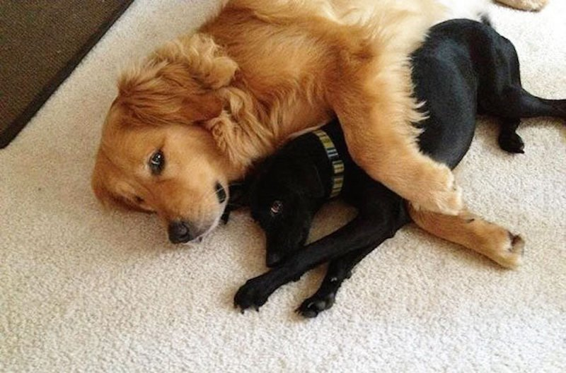 20 Adorable Photos Of Dogs Being Best Friends