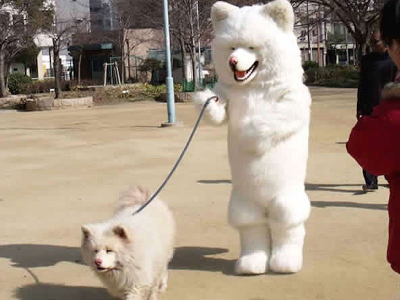 20 Furry Friends That Look Exactly Like Their Owners