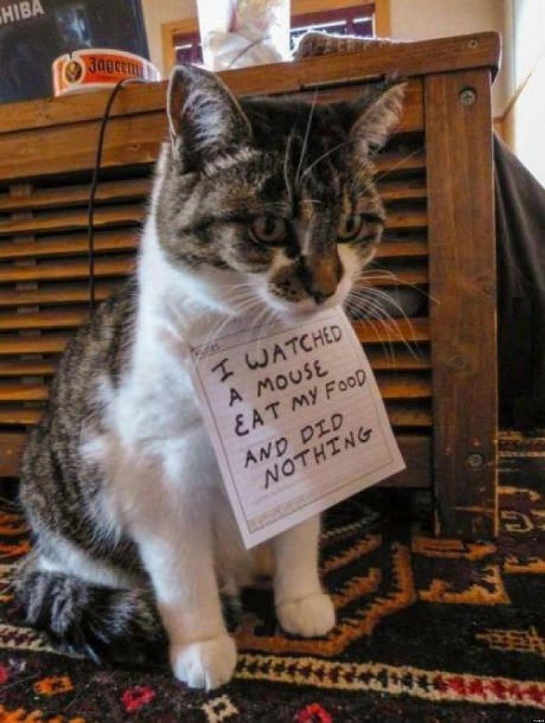 20 The Most Hilarious Cat Shaming Signs