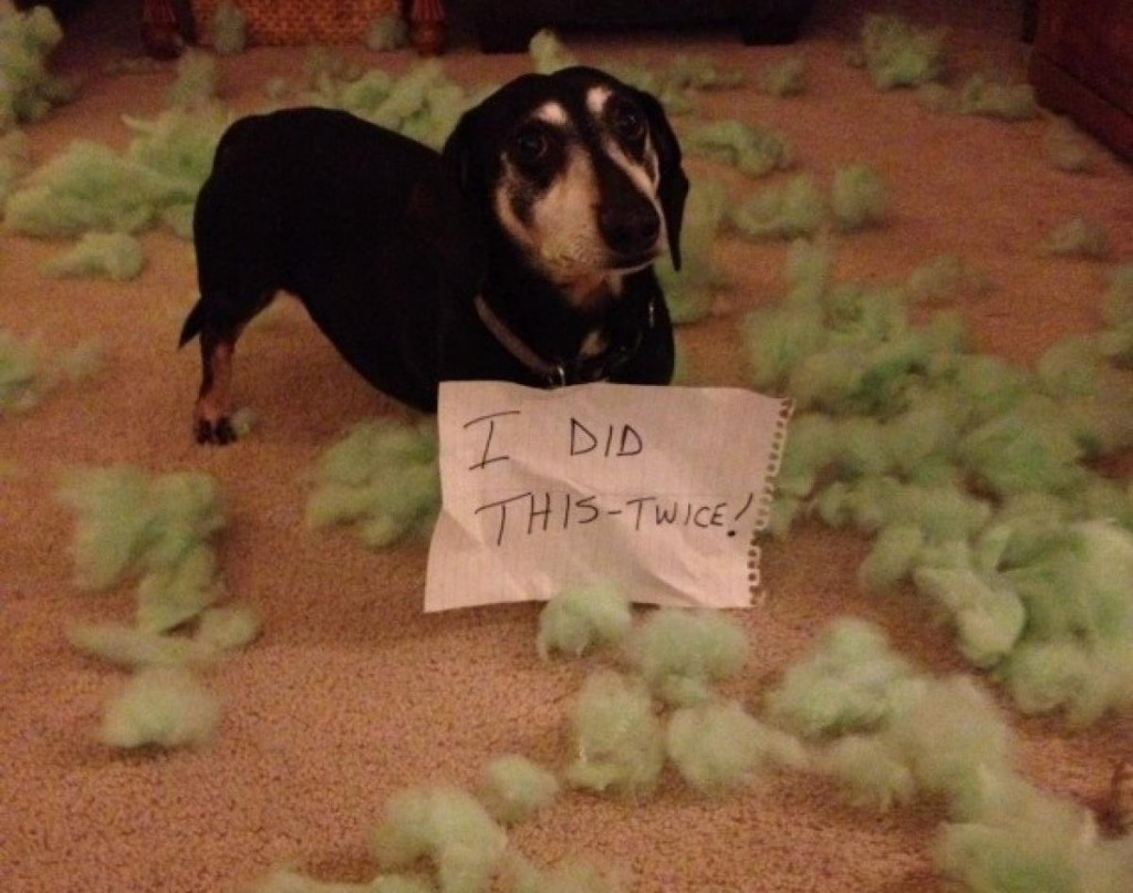 20 Of The Most Hilarious Dog Shaming Signs