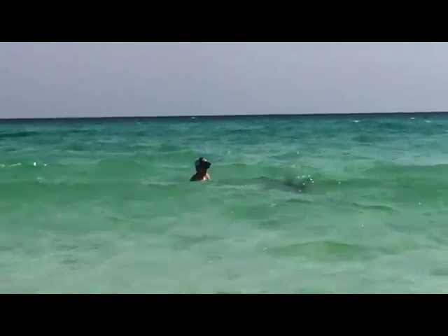 Incredible Video Shows Man Saving A Hammerhead Shark