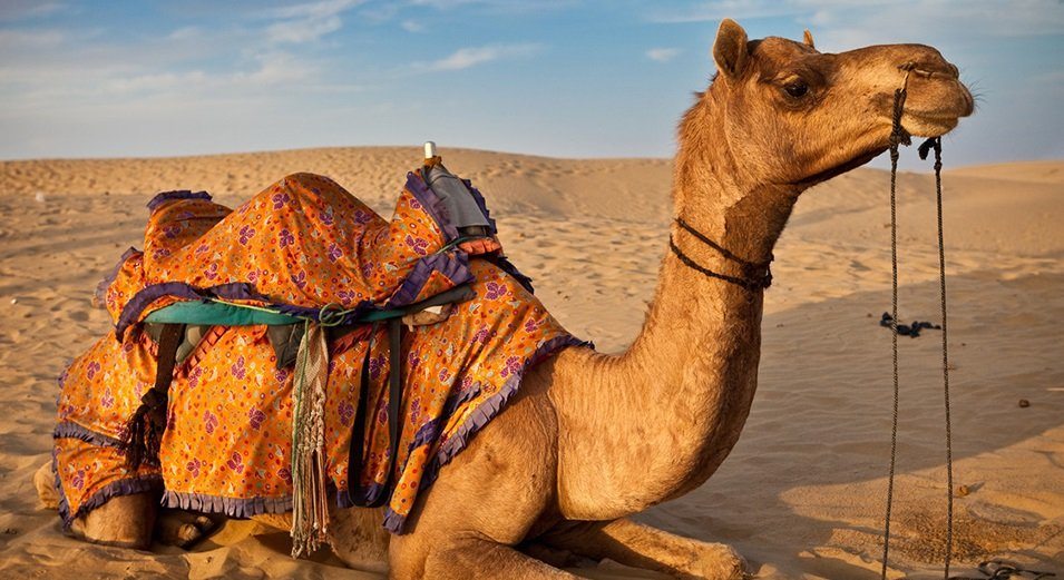 Teenage Boy Caught Having Sex With A Camel