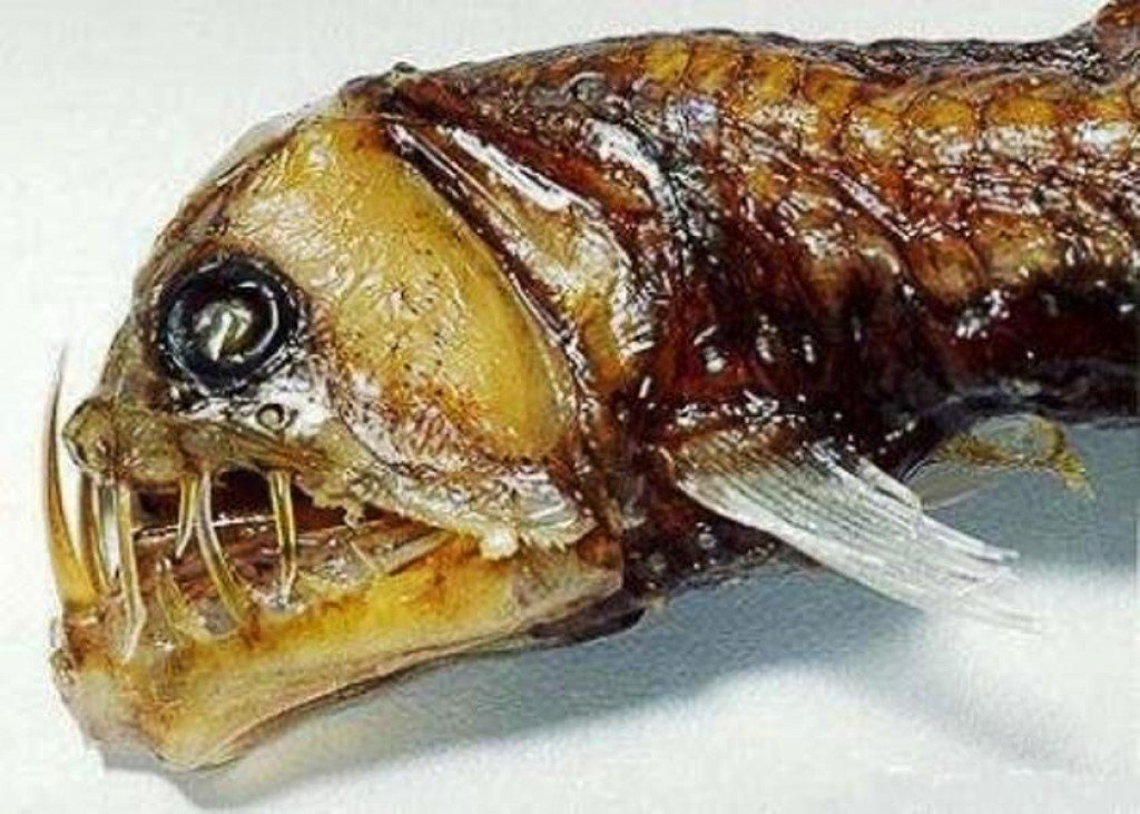 10 Of The Most Terrifying And Bizarre Deep Sea Creatures