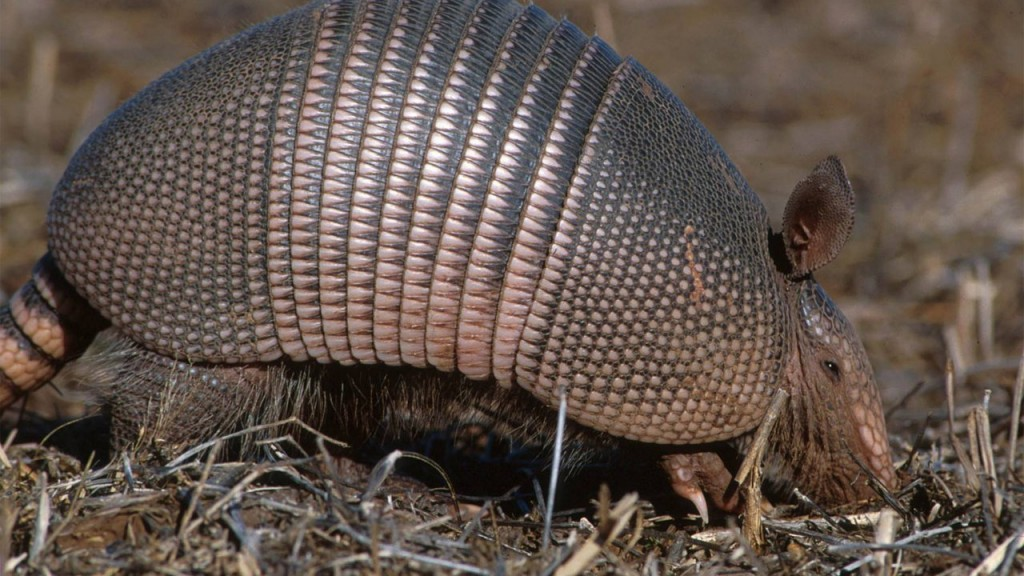 Man Shoots Armadillo, Ends Up Shooting Himself