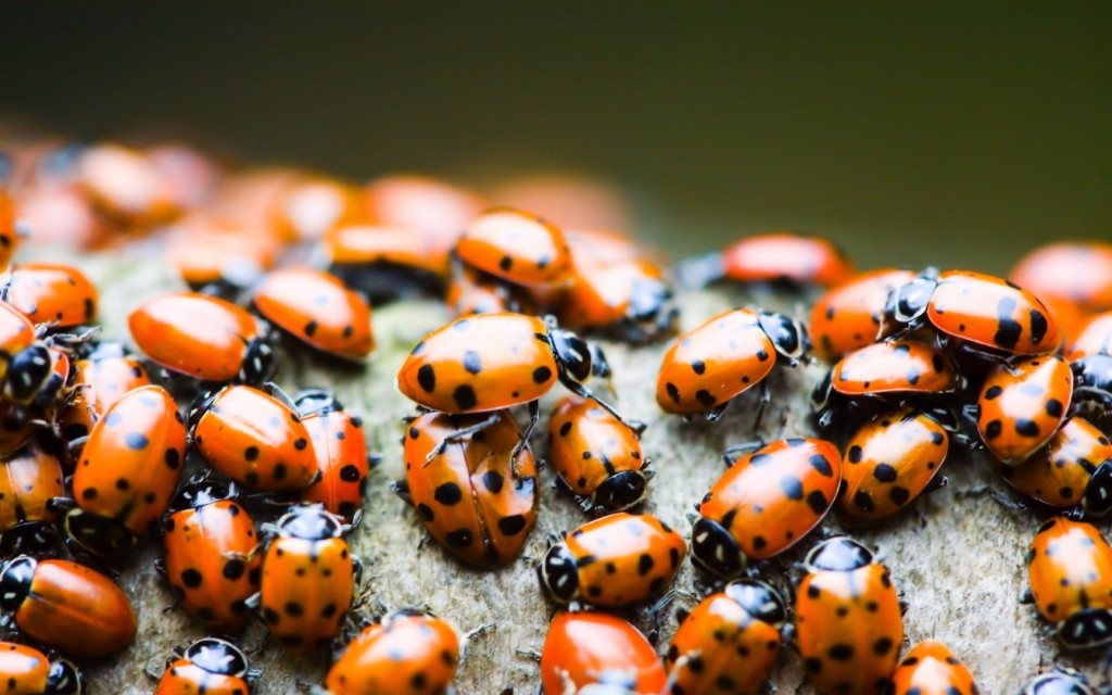 Students Release 72,000 Ladybugs For Senior Prank At Maryland High School