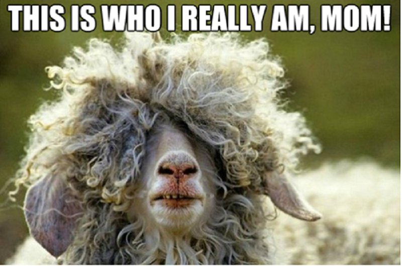 10 Hilarious Pictures Of Animals Being Emo