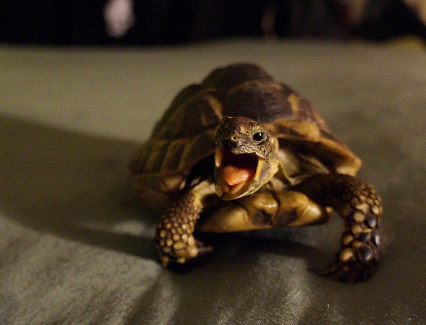 15 Reasons Why Reptiles Make Great Pets