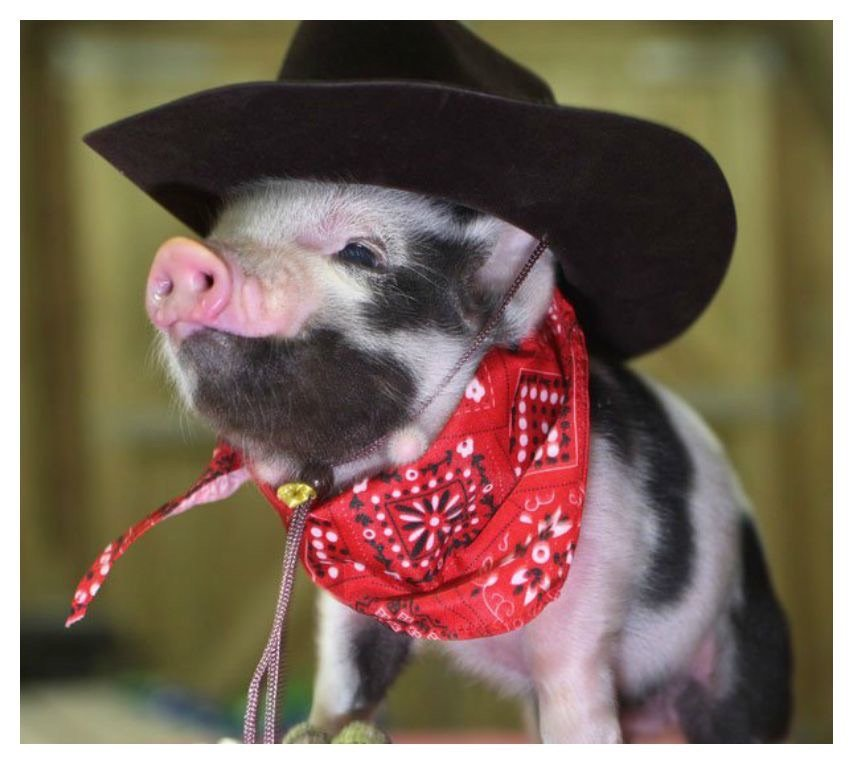 20 Of The Most Fashionable Pigs You've Ever Seen